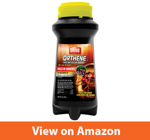 Best Fire Ant Killer Reviews
