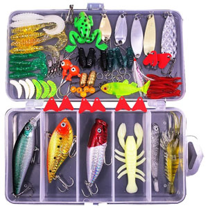 Best Bait for Bass Fishing in a Pond